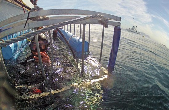 Cage diving day tour from Cape Town