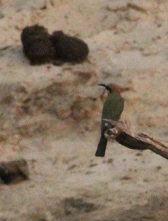 Shearwater Victoria Falls - Day Trips: Die Vogelwelt ist mit zahlreichen Exemplaren vertreten