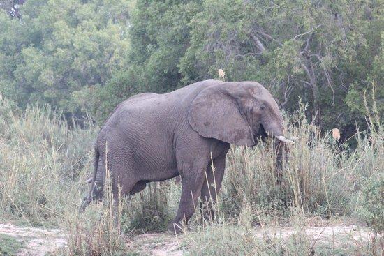 Shearwater Victoria Falls - Day Trips: Elefanten an beiden Ufern