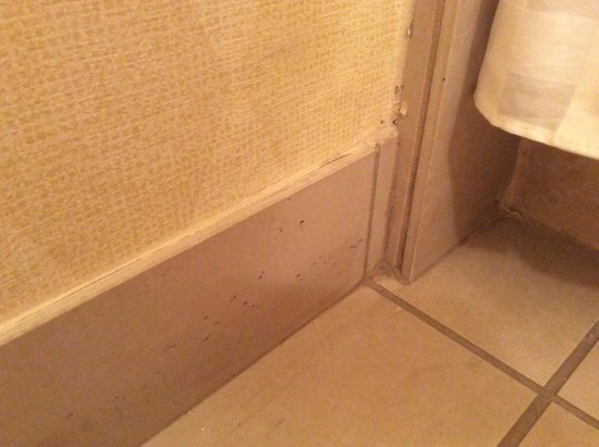 DoubleTree Resort by Hilton Paradise Valley - Scottsdale: Mold, dirt on baseboards and wall