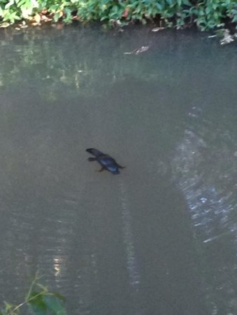 Uncle Brian's Tours: Platypus spotting on the way back to Cairns.