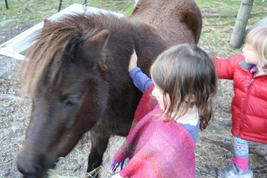 Horse-Haven Farmstay : Coco