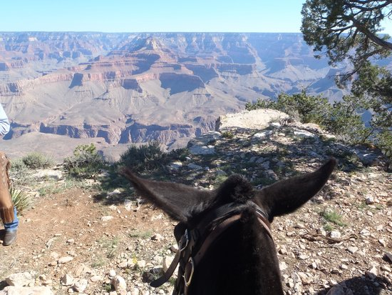 Grand Canyon Mule Tours by Xanterra: View from mule