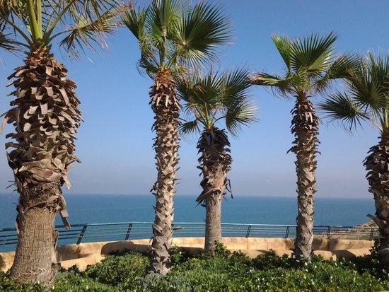Island Suites Hotel: promenade