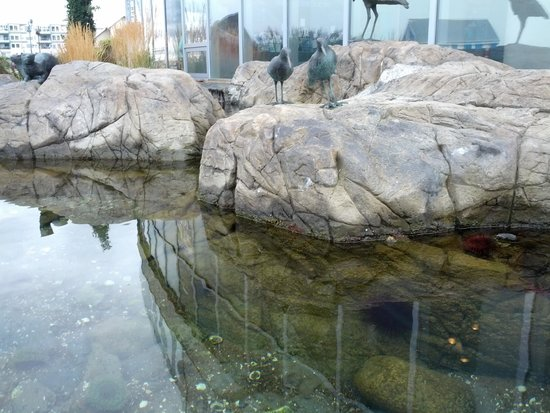 Shaw Centre for the Salish Sea: The Tidal Pools give you a close up look.