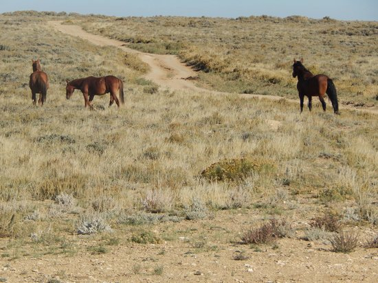 Hampton Inn Rock Springs: Wild Horses