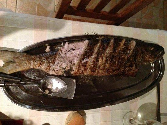 Aquario: Job fish immenso