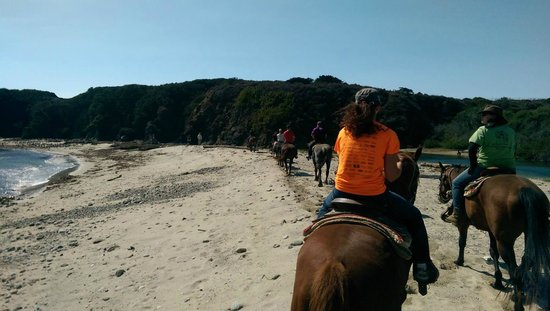 Molera Horseback Tours Big Sur June 2019 All You