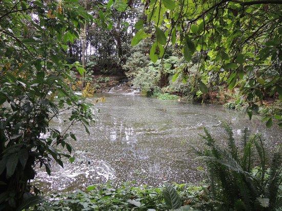 Cascada picture of jardin botanico de bogota jose for Cascadas de jardin