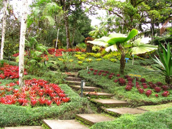 San Vito, Costa Rica: Bromeliad Hill around the old Casa Wilson