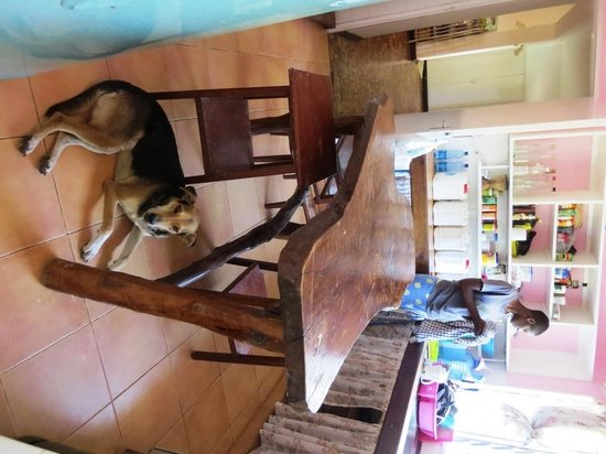 Backpacker's Nirvana: kitchen & our puppy