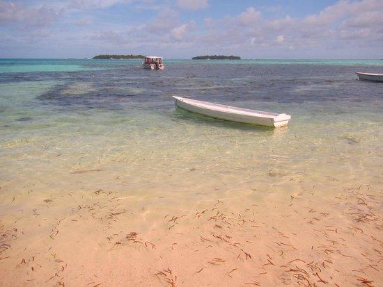 Sun Suites Maldives : On the snorkelling trip! :)