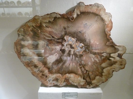 Rice NW Museum of Rocks and Minerals: Petrified Wood