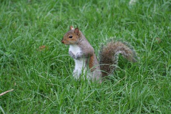 Uno scoiattolino grigio quando ancora ce ne erano foto for Parchi di nervi