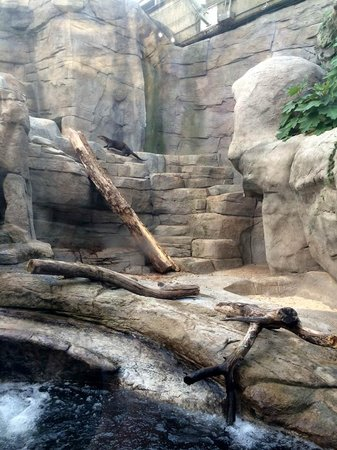 Tennessee Aquarium: The otter exhibit