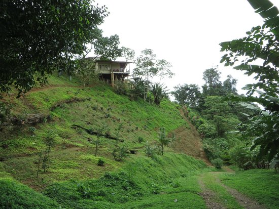 Rio Magnolia Nature Lodge : Newest coffee plants