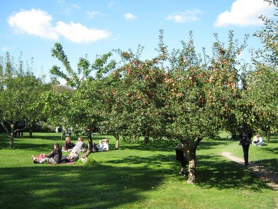 Orchard Picture Of Rosendals Garden Stockholm Tripadvisor