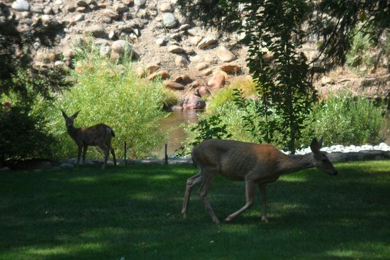 Lure Resort: Deer on the Lawn