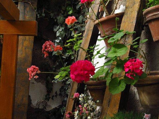 Hotel & Spa Termas Cacheuta: flores