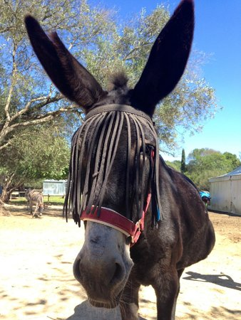 One of the very many gentle donkeys - Picture of Corfu ...