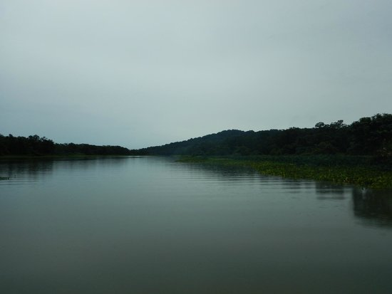 Guided Bird Tours: Chagres River
