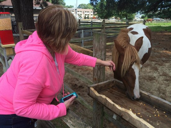 Refuge Inn: Friendly Ponies