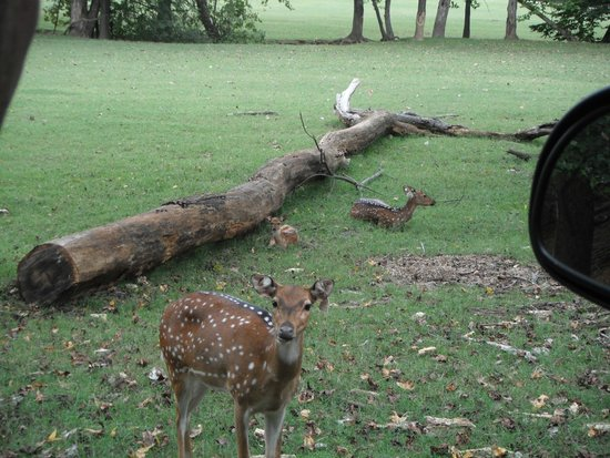 The Lazy 5 Ranch: deer