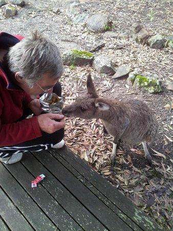 Eaglereach Wilderness Resort: sharing brekky