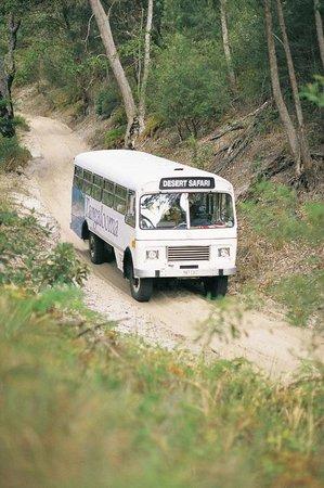 Tangalooma Island Resort Desert Safari Tour