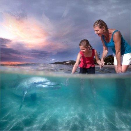 Sunset visitors - Nightly Dolphin Feeding at Tangalooma