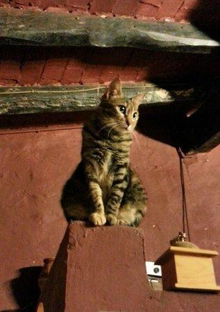 Mas Torrencito: Martina en la chimenea