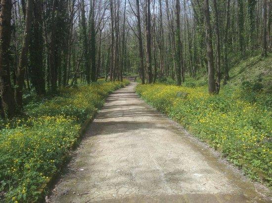 Parco Urbano dei Camaldoli