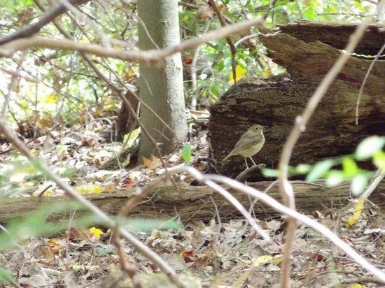 New Germany State Park: Bird