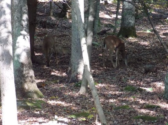 Deer Picture Of New Germany State Park Grantsville Tripadvisor