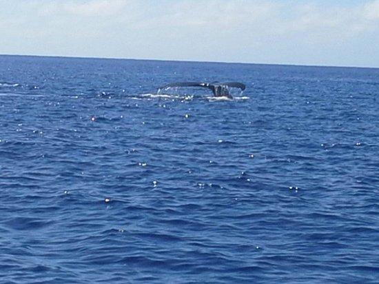Wet & Wild Aitutaki: Whale off Aitutaki