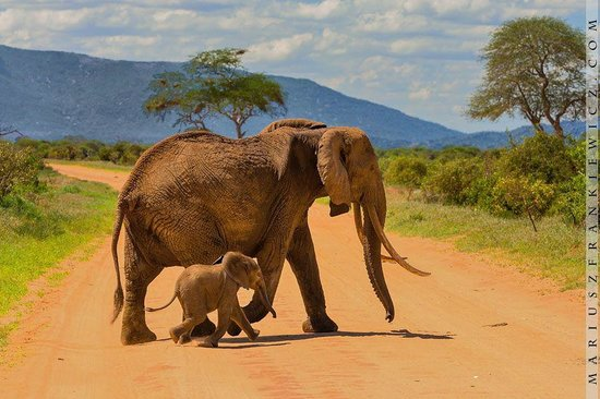 Kilifi, Kenia: Mama Elephant and Toto