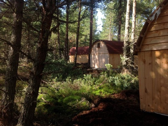 Camping Pod Heaven: Pods in the woods