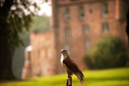 Bonnyrigg, UK: Falconry at Dalhousie Castle
