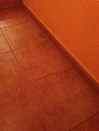 Montinho de Ouro: Lizzy the Lizard was brutally murdered by hotel staff, was very disturbing and traumatic and men