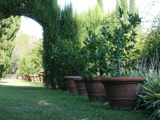 Castello di Montegufoni : The oldest potted lemon grove in the world