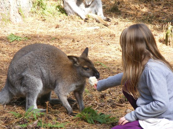 New Forest Wildlife Park: Close encounter with the wallabys