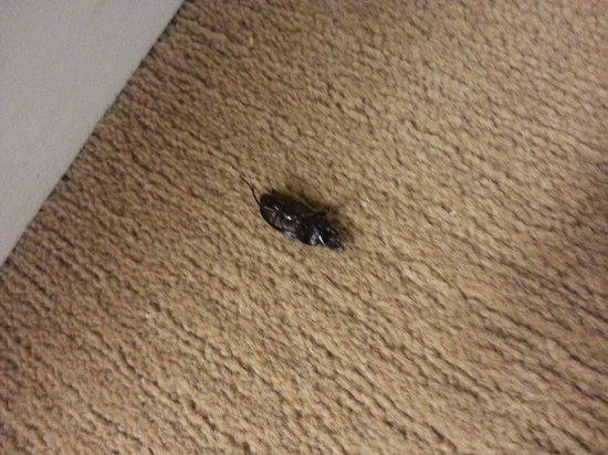 Days Inn Sherman : Bugs all over the Hall, never cleaned up!