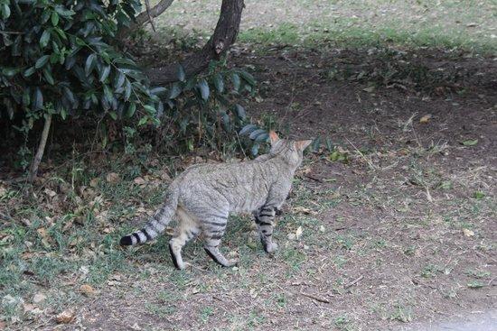 """Emdoneni Cheetah project: """"Einfache"""" Wildkatze"""