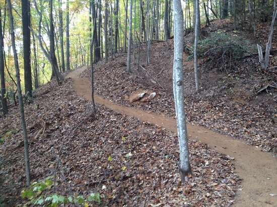 Buffalo Creek Park Mountain Biking Trail