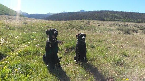 Oleo Ranch: Happy pups ready to hike