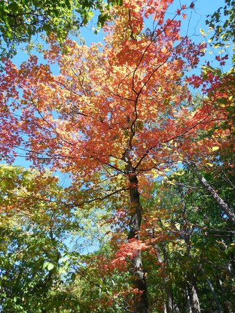 Staatsburgh State Historic Site / Mills Mansion: Fall Foliage is beautiful