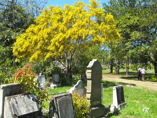 Rookwood Cemetery and Necropolis: September Wattle at Rookwood