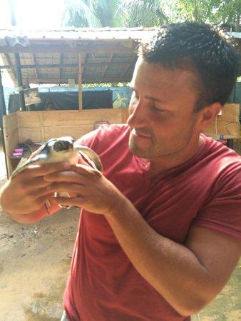 Bentota, Sri Lanka: Schildi
