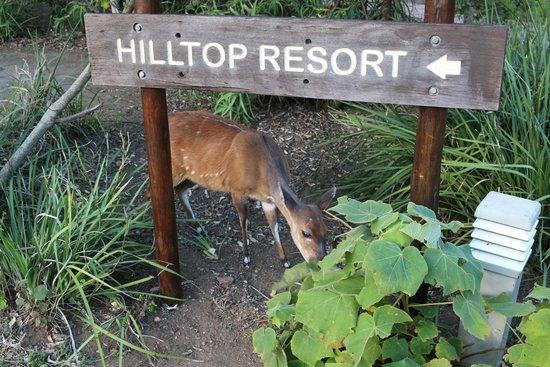 Hilltop Camp: Plenty of animals around