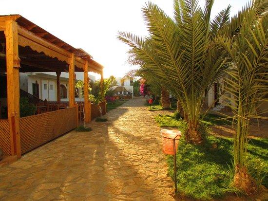 Jowhara Hotel: uitzicht vanuit entree